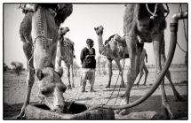 camel_legs